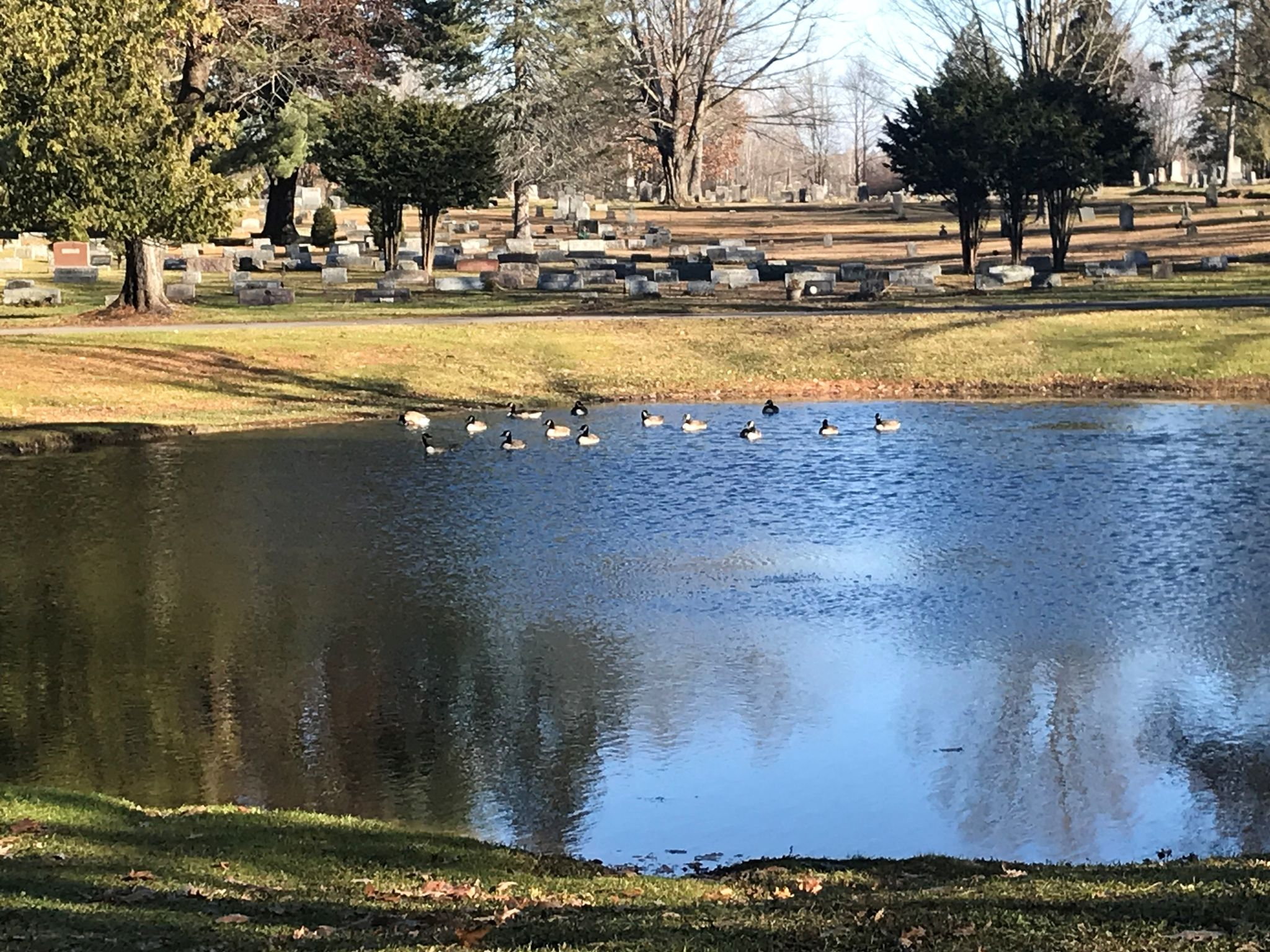 Ducks enjoying the pond